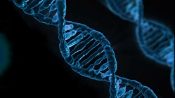 Rendering of a DNA helix.