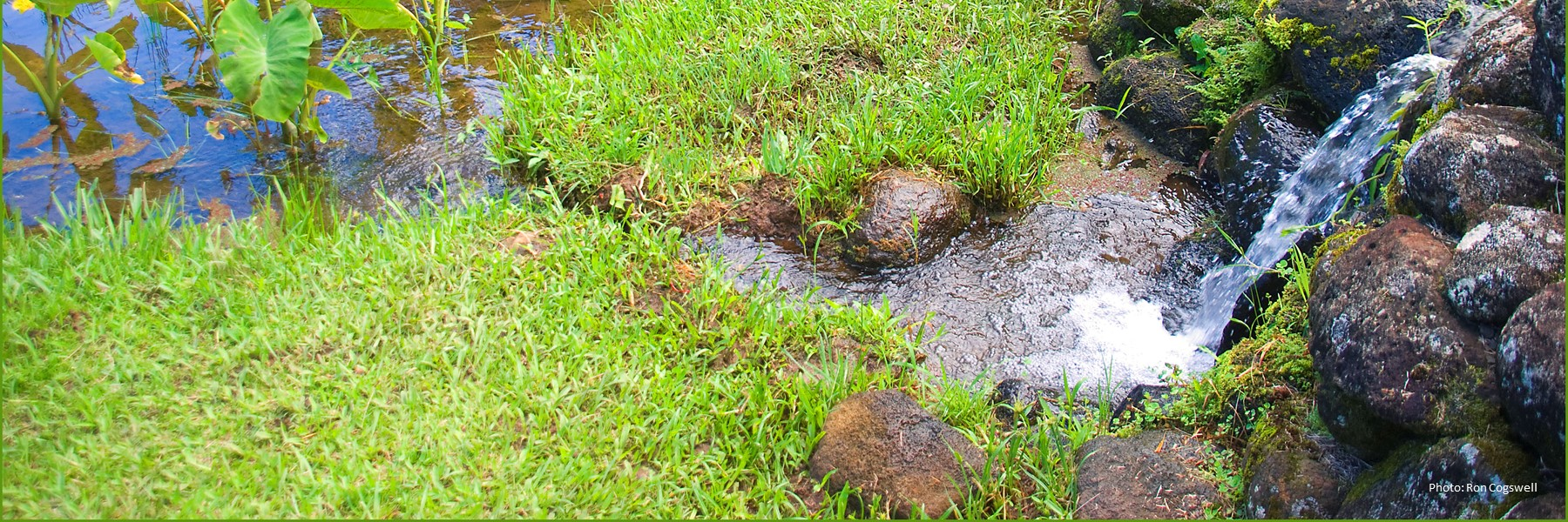 Water Draining Into A Loʻi.