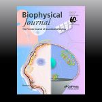 Image of Biophysical Journal cover.